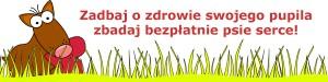 Konsultacje kardiologiczno – neurologiczne w Kołobrzegu