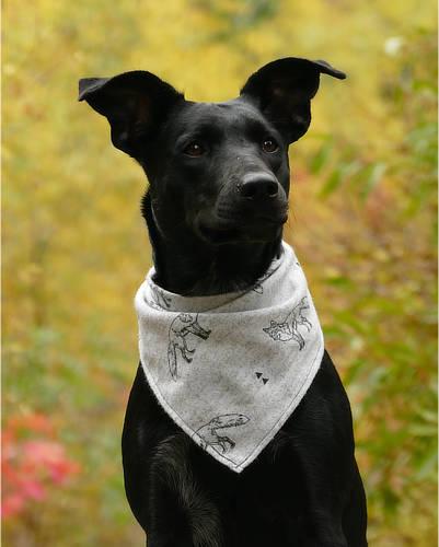 Zabezpieczony: Formularz Rejestracji Safe Animal