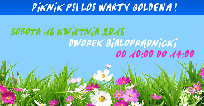 piknik_psi_los_warty_goldena