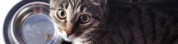 Mruczek sam nie poprosi o pomoc – zbiórka dla kotów!