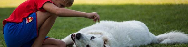 """Pies """"dogoterapeuta bez bioder"""" walczy o każdy krok!"""