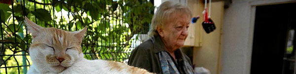 Przytulisko dla kotów w Gliwicach w potrzebie!