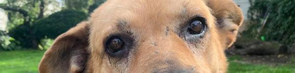 Starsze psiaki polecają się do adopcji… Poznaj je już teraz!